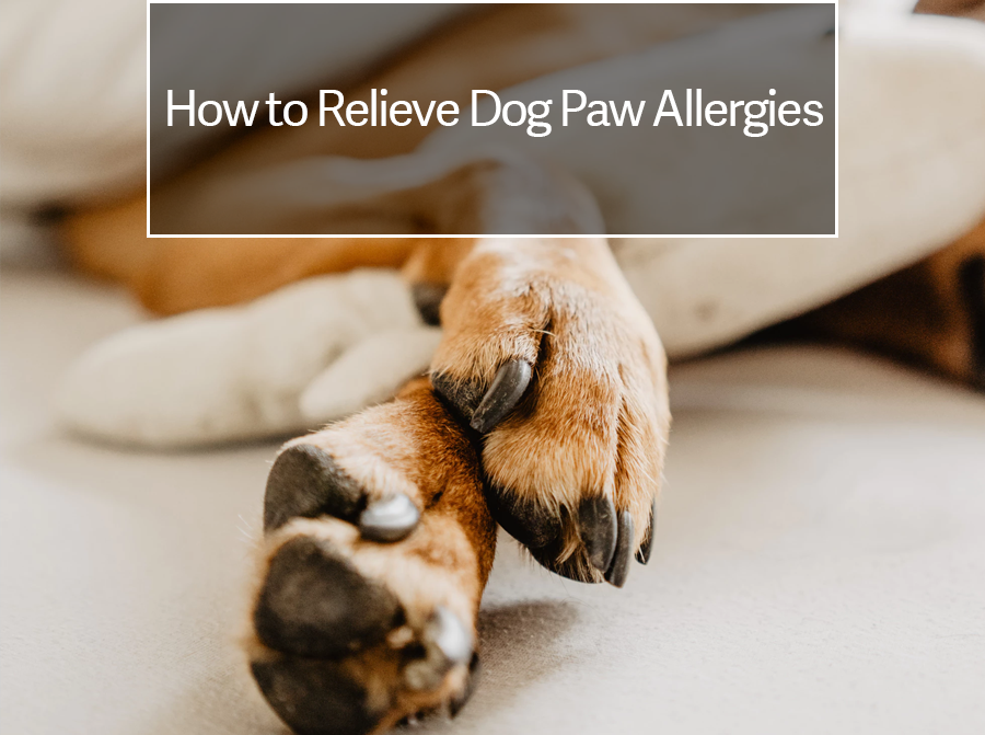 Dog Paws Red Between Toes Natural Remedies