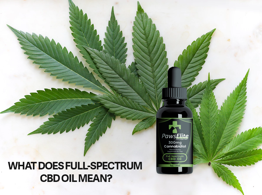 More than CBD Oil for Pets: What does Full-Spectrum CBD Oil Mean?