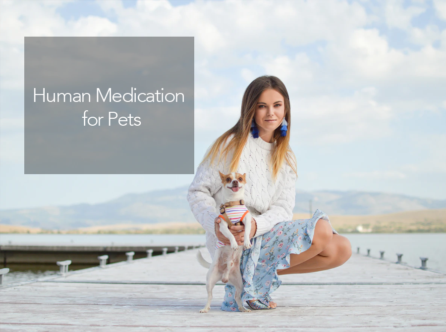 Human Medicine for Dogs Can be Safe or Toxic - Find Alternatives