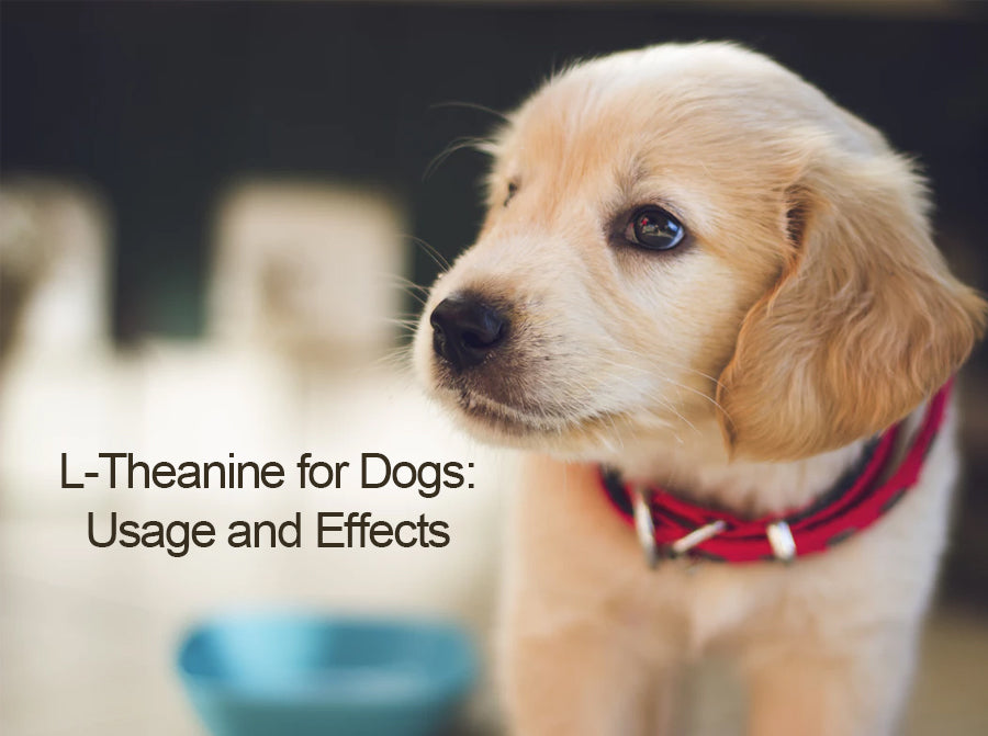 Effective Treatment with L-Theanine For Dogs: Dosage and Side Effects