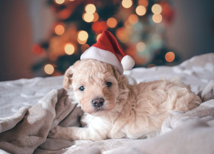 Best Tips for Pet-Friendly Holiday Decorating