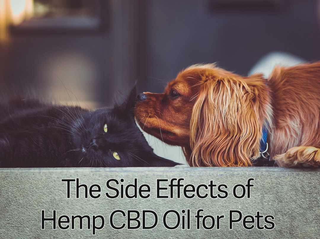 What Are The Side Effects of CBD oil for Dogs and Cats?