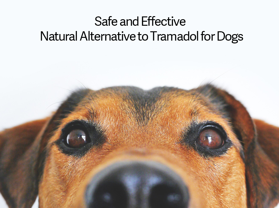 Safe and Effective Natural Alternative to Tramadol for Dogs