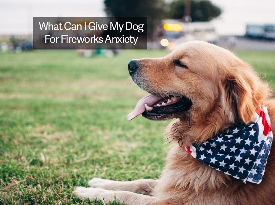 What Can I Give My Dog For Fireworks Anxiety? CBD Oil for Dogs