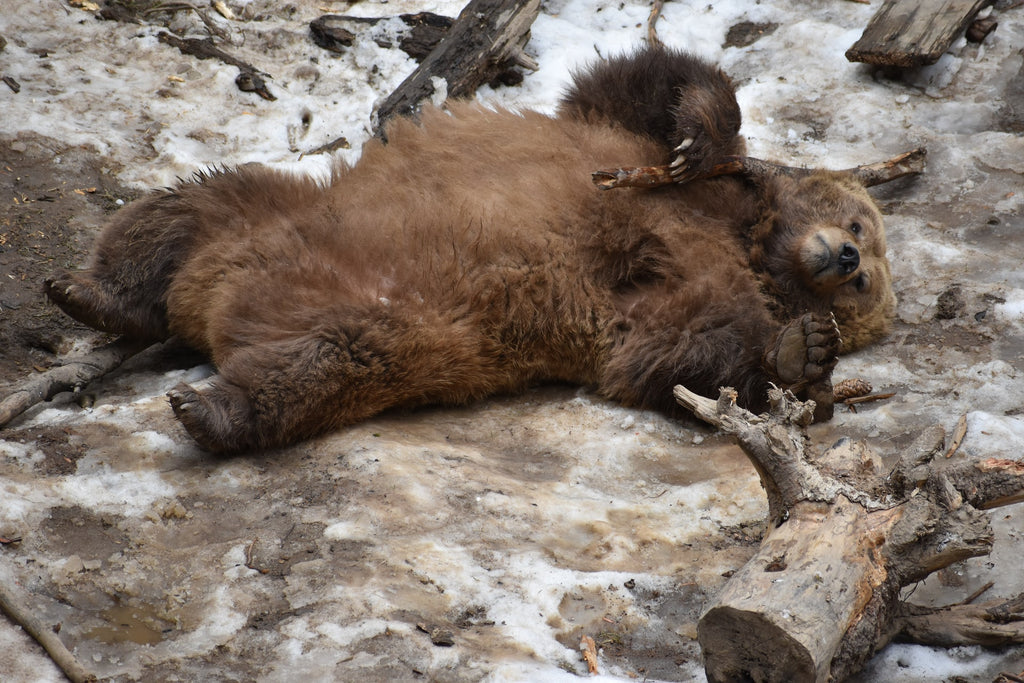 Check out our list of cute bear names