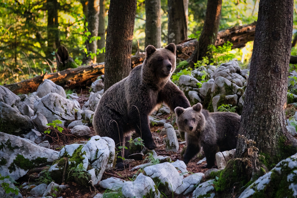 Female bear names we've gathered to share with you! Check out these female bear names.