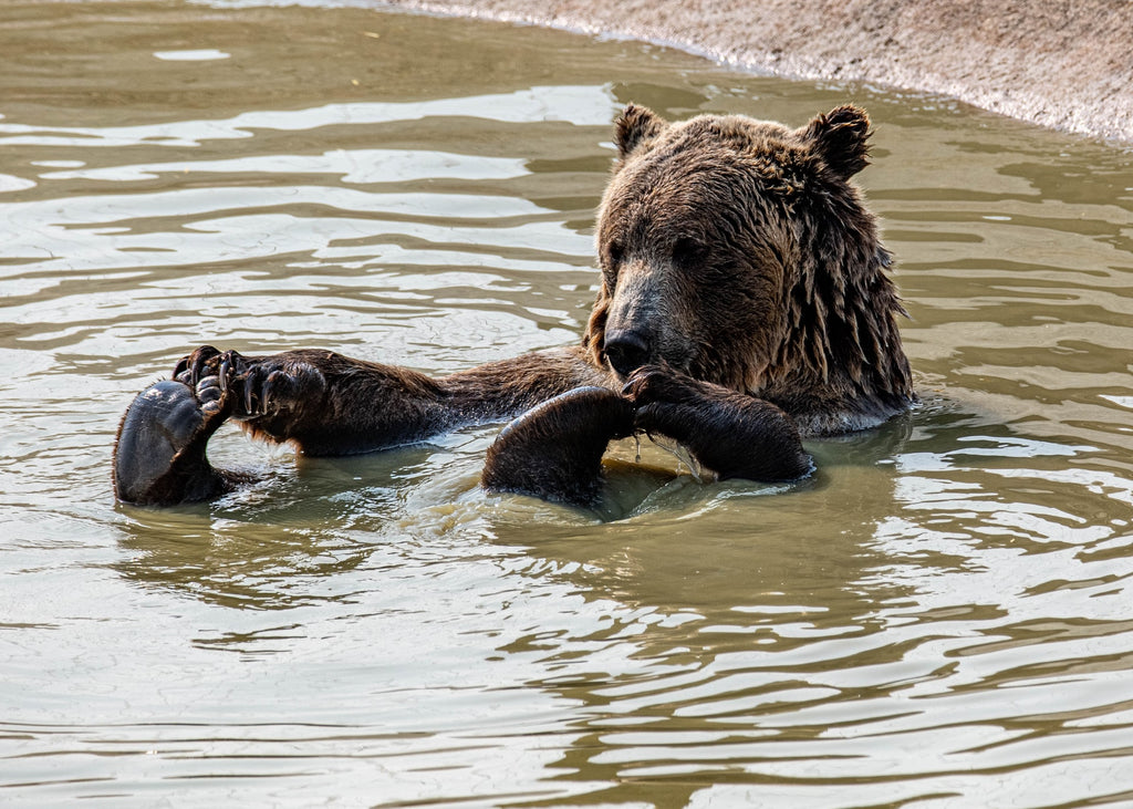 Funny Bear Names that'll make you smile and laugh.