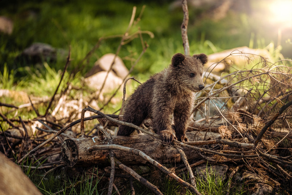 List of top popular bear names we could gather. See the list of popular bear names