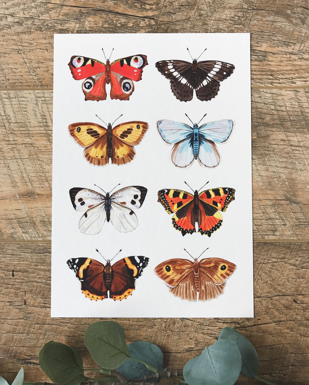 British Butterfly Print - SHOP CORDUROY