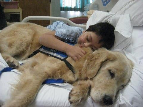Image of: Esa What Is An Emotional Support Dog Fedsmithcom What Is An Emotional Support Dog Bubble Paws