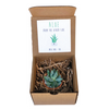 ALOE from the Other Side - Gift Box
