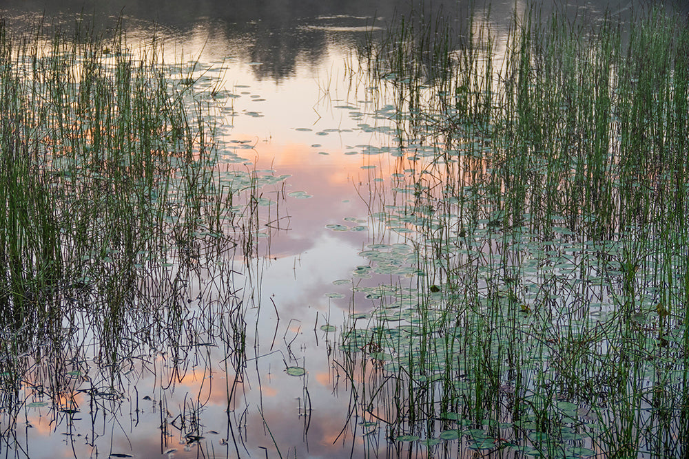 'Morning Reflections' by Julia Preminger