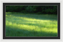Early Morning Meadow - Framed Print