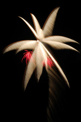 Silver palm firework with two red coconuts