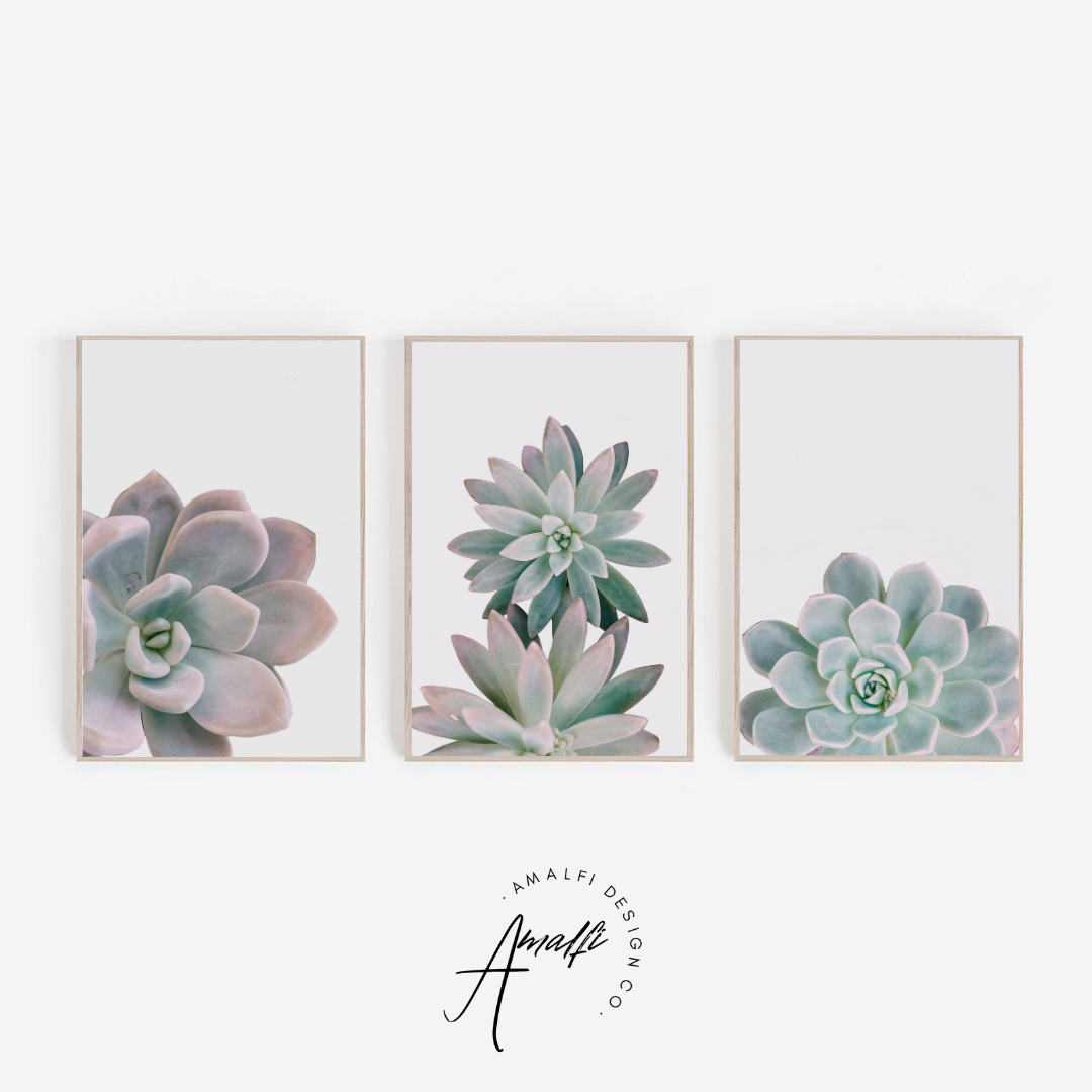 Buy SUCCULENT PRINT SET ON WHITE BACKGROUND- INSTANT DOWNLOADfrom Amalfi Boutique