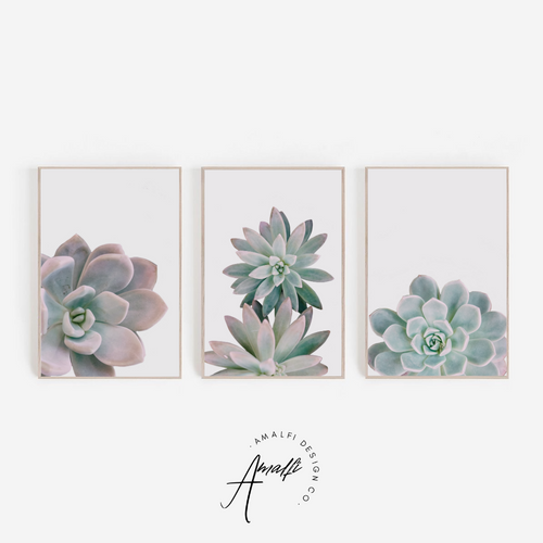SUCCULENT PRINT SET ON WHITE BACKGROUND- INSTANT DOWNLOAD