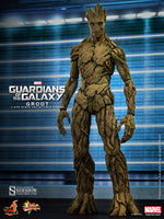 Hot Toys 1/6 Guardians of the Galaxy Movie Masterpiece Series Groot Sixth Scale Figure MMS253