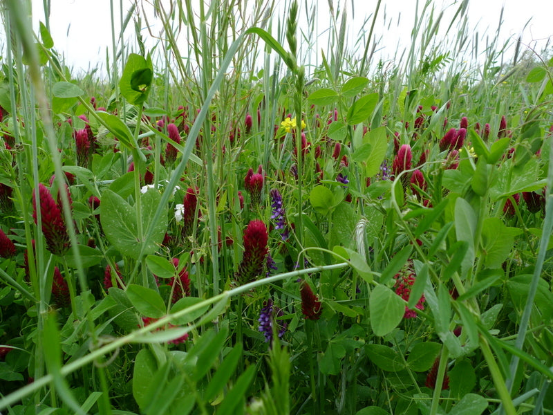 Cover Crops 3 Ways - The Sustainable Paddock