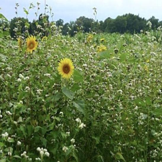 5 Way  Cover Crop Mix - The Sustainable Paddock