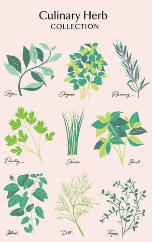 Tea Towel - Culinary Herbs