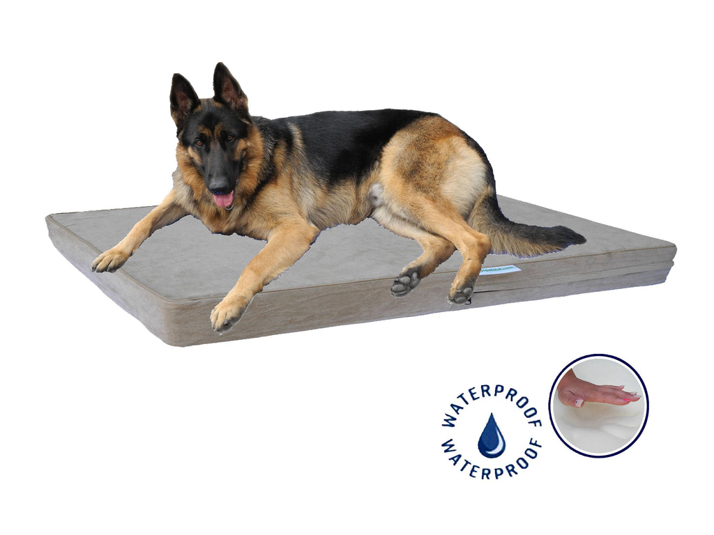 "4"" Solid Memory Foam Bed with Waterproof Cover (Available in 25"" to 55"")"
