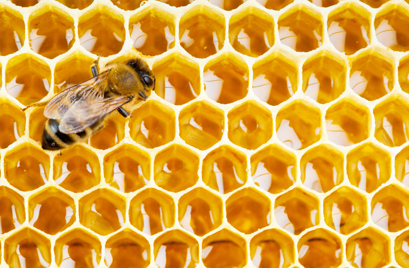 Royal Jelly vs Royal Honey - What's the Difference?