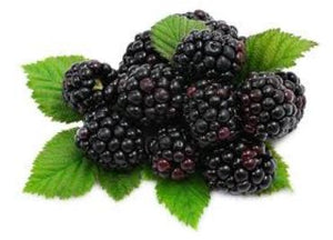Blackberries USA/Mexico 12x170g
