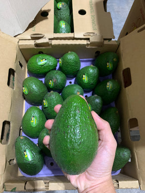Jumbo avocado mexico