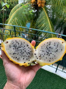 Yellow Dragonfruit 2-3kg