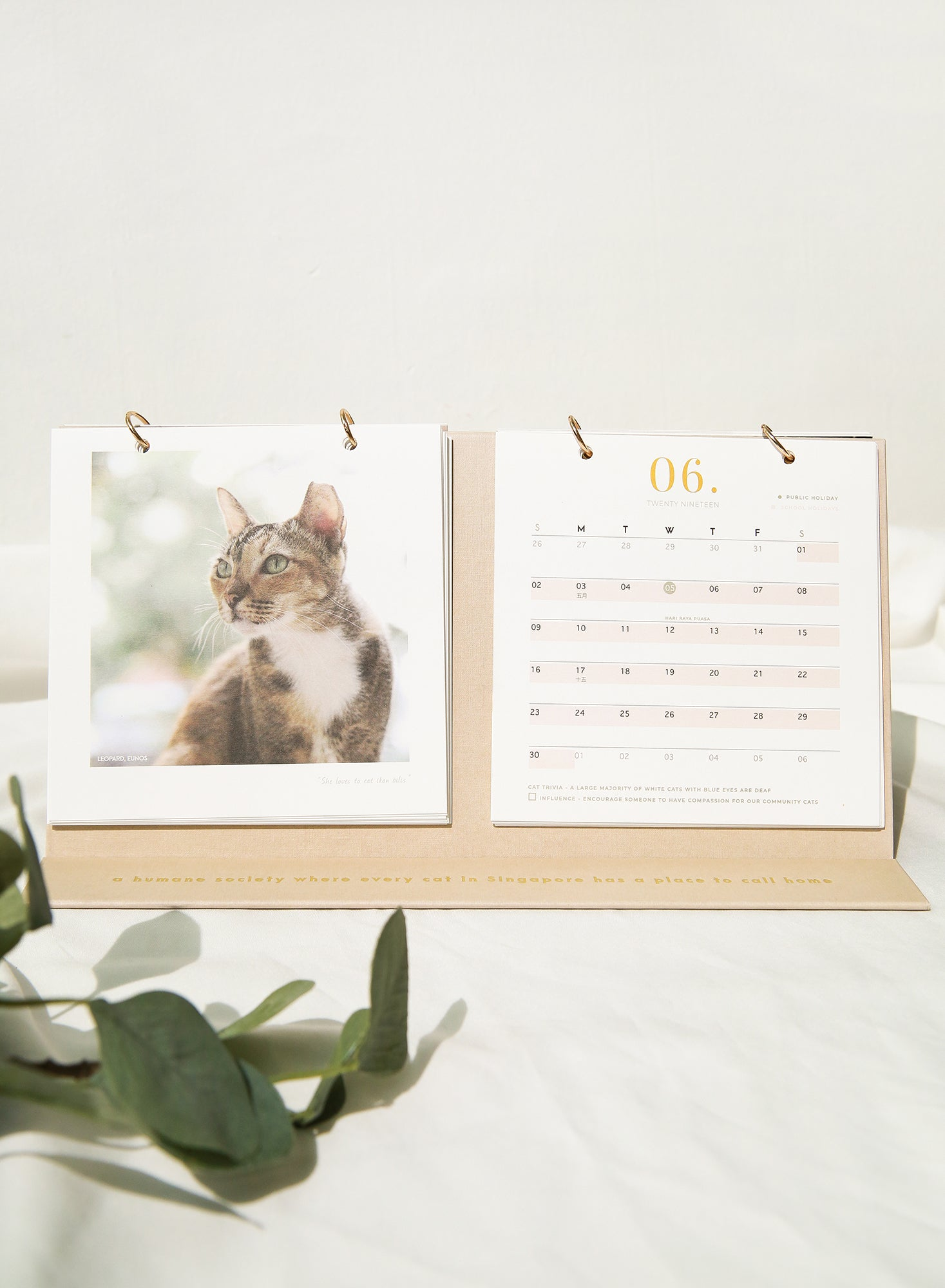 Cat Welfare Society 2019 Calendar at $ 15.00 only sold at And Well Dressed Online Fashion Store Singapore