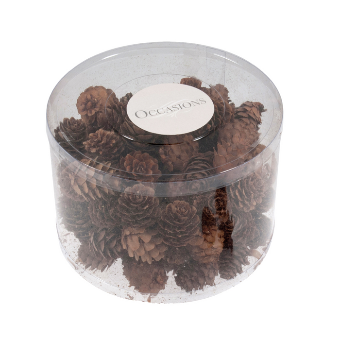 100 x 3-5cm Pines Cones in a Clear Tub