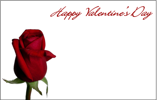Valentine Florist Message Cards - Happy Valentines Day  x 50