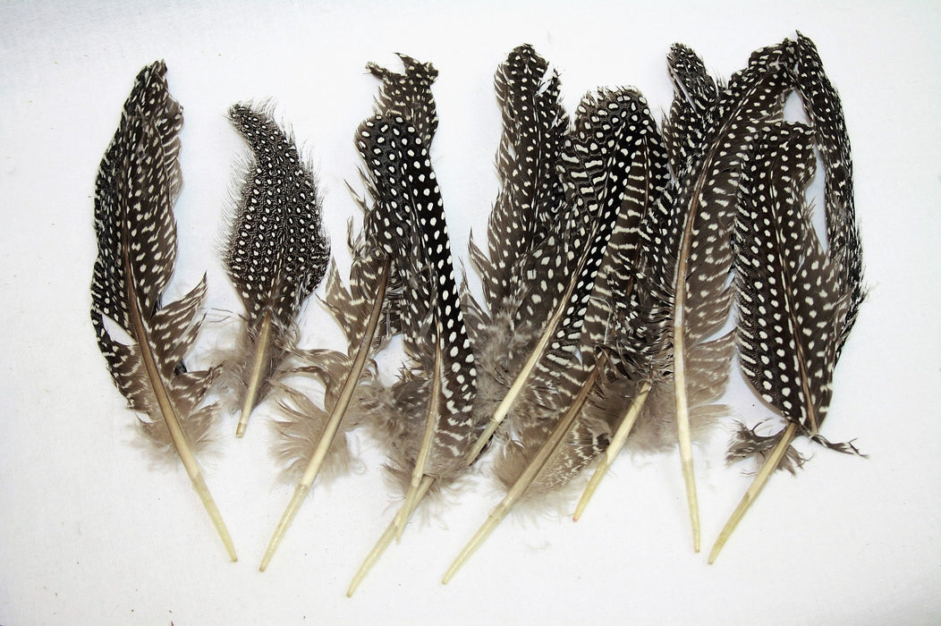 Natural Guinea Fowl Feathers x 12