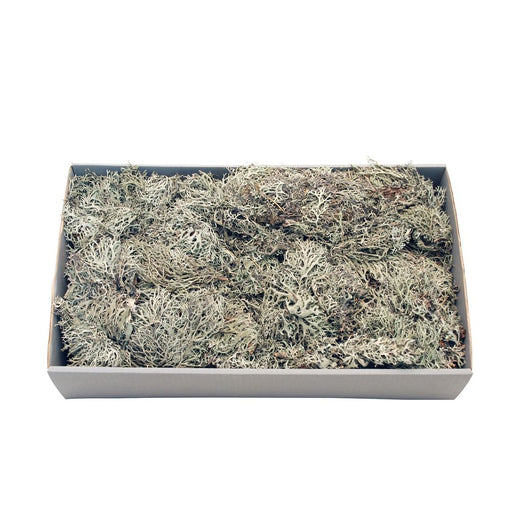 Grey  Moss w/Tray (Natural) (500gr)