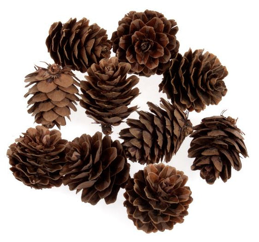 10 Mini Glitter Natural  Pine Cones