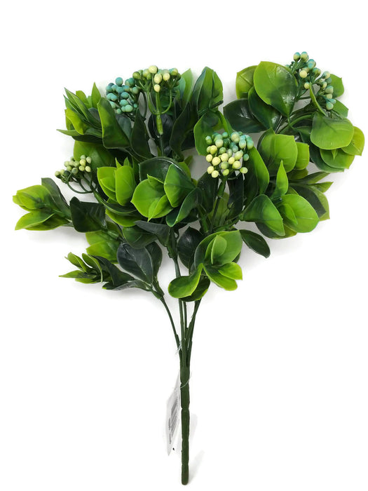 Japanese Skimmia Flower Berry Bush x 30cm - Green & Turquoise