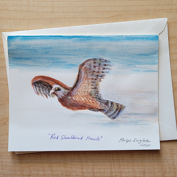 Hand Painted Card - Red Shouldered Hawk