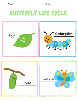 Load image into Gallery viewer, Butterfly Life Cycle and Names of Allaah Worksheet