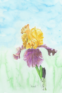 """Reach"" original watercolor Iris"