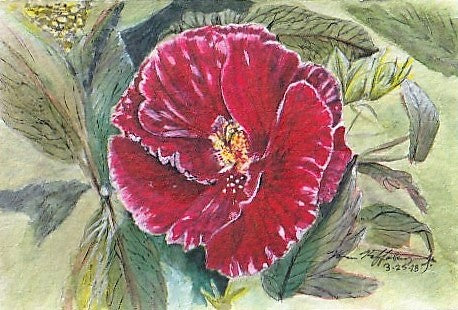Red Hibiscus, Print