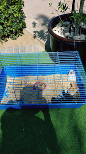 rabbit petting station dubai
