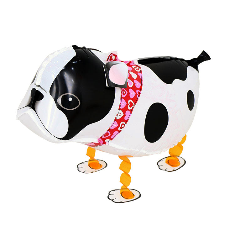 pitbull dog  walking balloon