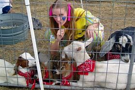 Petting Station Rental - Baby Goat - PartyMonster.ae