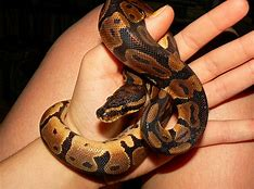snake petting zoo rental