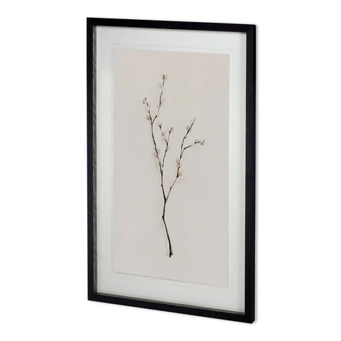 White Willow I