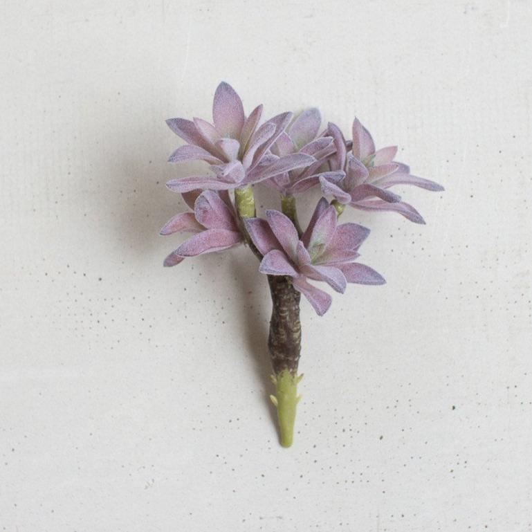 Mona lavender purple succulent green stem