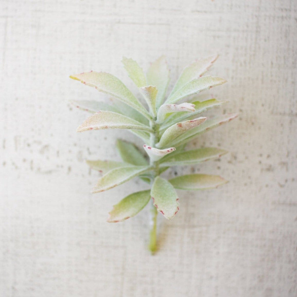 Portwood Plant accesories decor botanical
