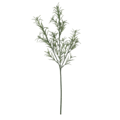 Rosemary Stem Botanical