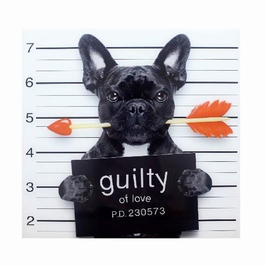 French Bulldog Guilty of Love Wall Art