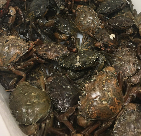 Live Green Crab Full Bushell